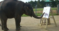 Elephant Whipsnade Painting Zoo