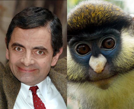 Celebrity Animal Look A likes. - Home | Facebook