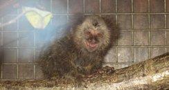 Tya when she arrived at Monkey World