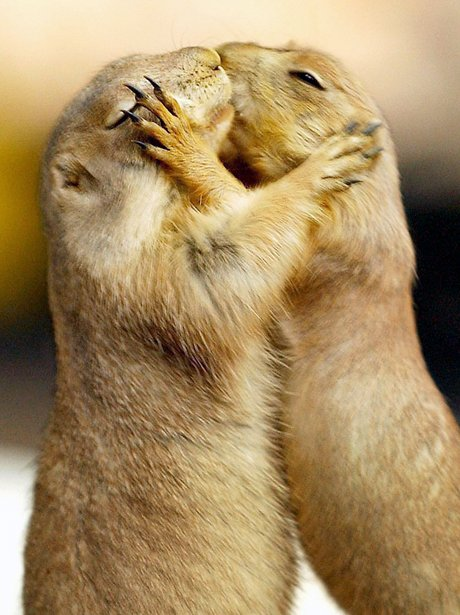 cute animals in love pictures wwwimgkidcom the image