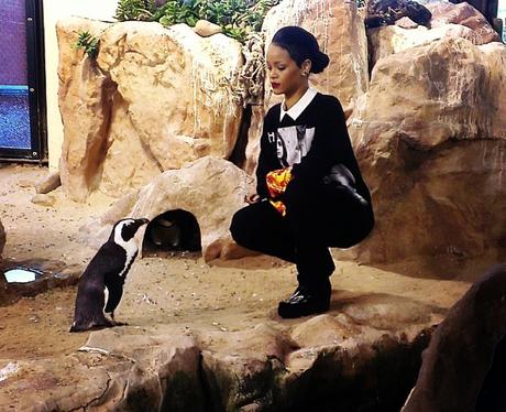 Rihanna and a penguin