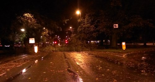Fallen tree in Southampton