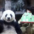 Panda Bear with a birthday cake