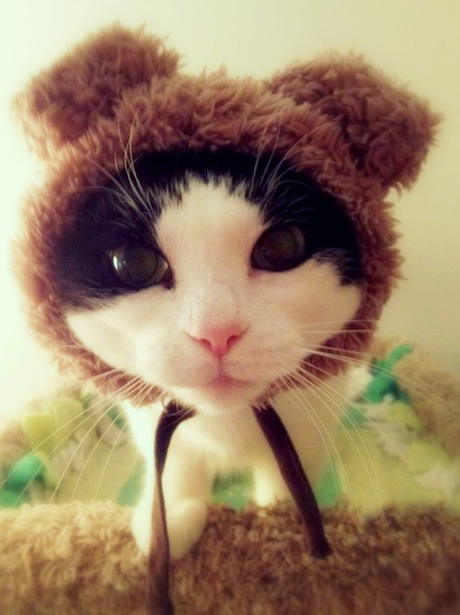 A cat with a hat on