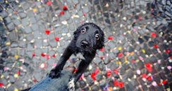 Cutest Pictures Of The Week - 14 May 2014