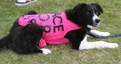 Truro Race For Life Doggies