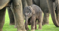 Baby Elephant at Whipsnade Zoo