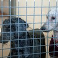 dogs abandoned Winchester moved to RSPCA Centres
