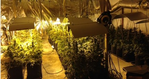 Plantes seized in Churchdown