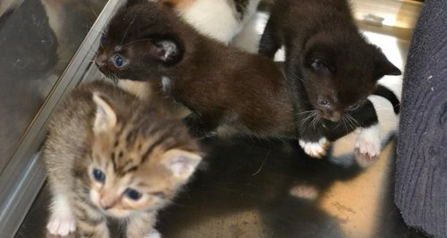 The box of kittens was found in Chelsmford.