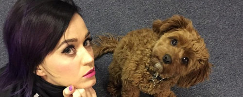 Katy Perry and her dog!