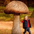 Wakehurst Wild Wood Weekend