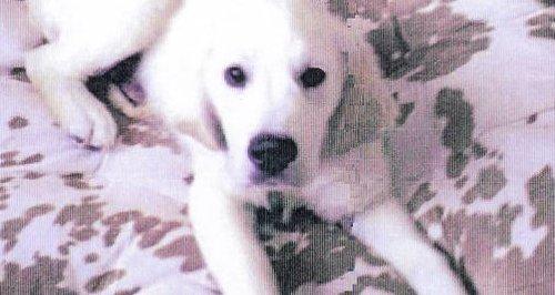 Watford Puppy