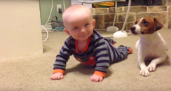 Storyful: Dog Teaches Baby to Crawl