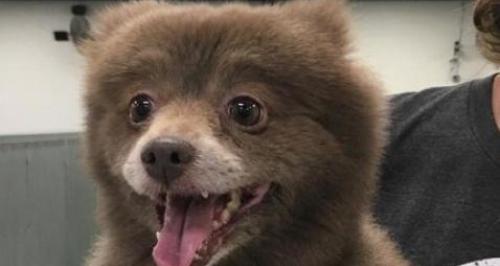 bear or a dog illusion imgur