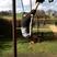 16. Ellie Goulding monkeys around in a playground.
