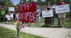 Gorilla RIP Cincinnati