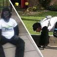 There's A Man Dressed As A Gorilla Who Is STILL Do