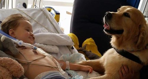 therapy dogs children Southampton hospitals