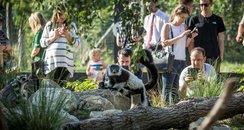 Lemur Loop Marwell Zoo